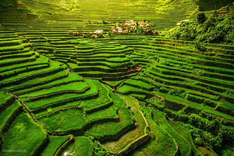 Például a világörökség részét képző batadi rizsteraszok Luzonban.