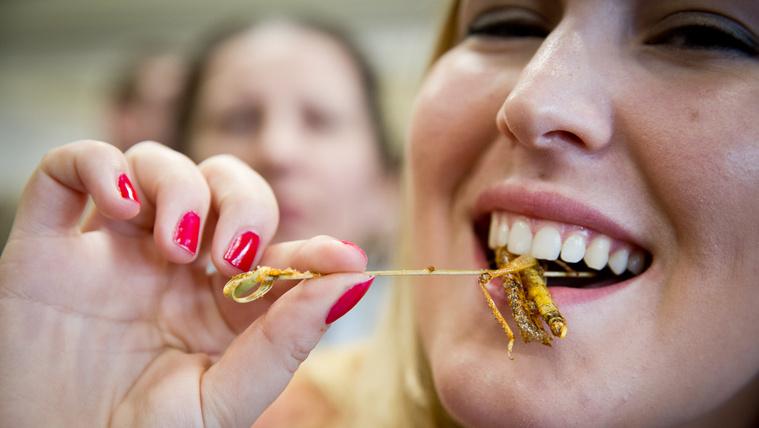 A miniszter távollétében lótetűt etettek velem az idegenszívű rovaristák