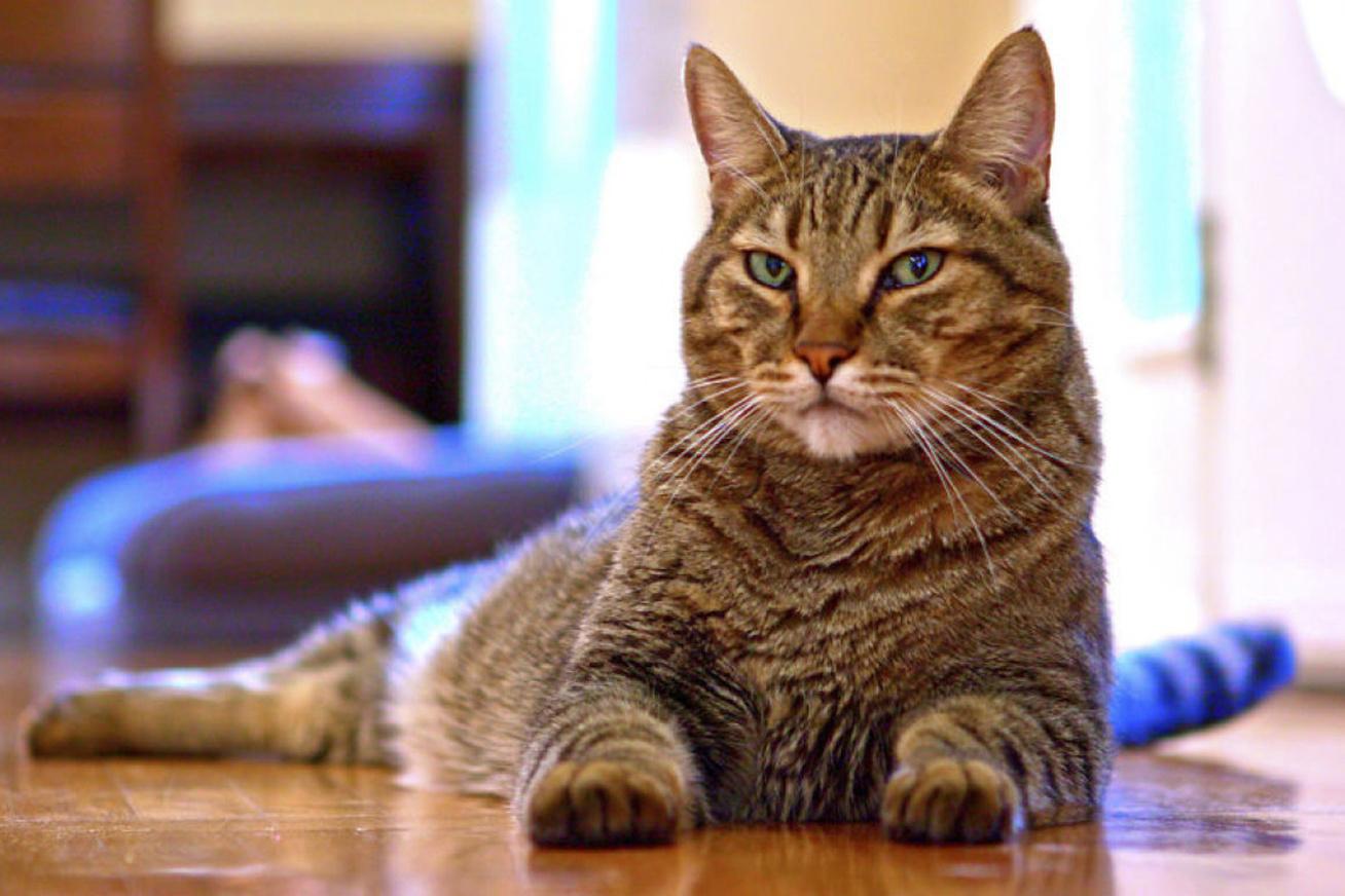 macska-sparta