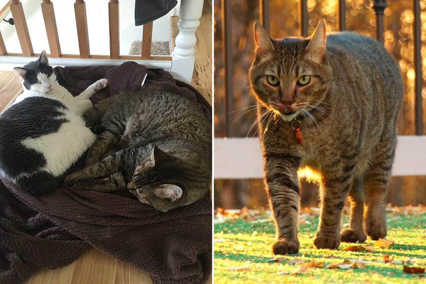 Cory két cicával osztja meg az otthonát, Lokival és Spartával, de ebben a videóban csak a jobb oldali fotón is látható utóbbira helyezte a hangsúlyt.