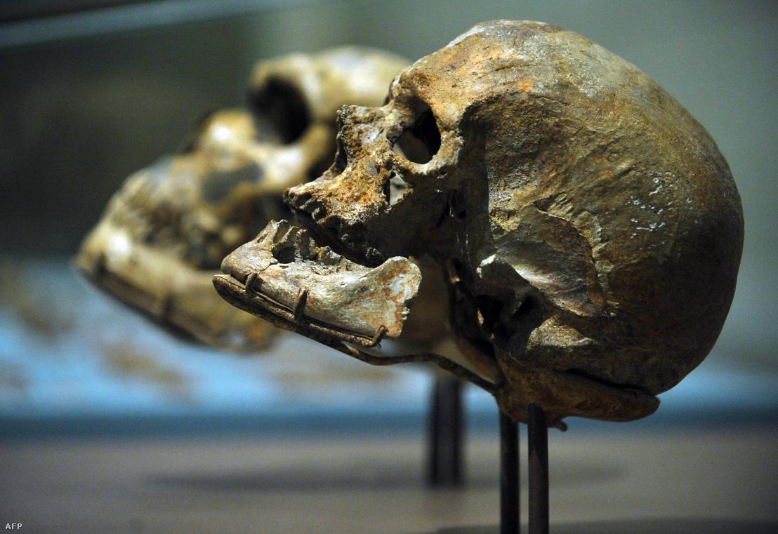 Nenadervölgyi és cro-magnoni koponya