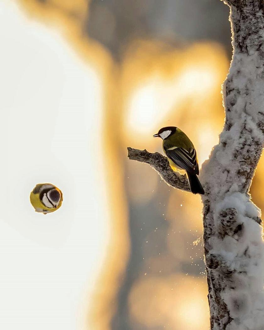 dühös madarak 2 pénzt keresni