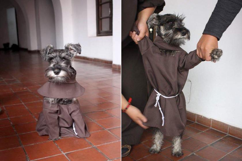 Bajusz testvér egyáltalán nem bánja, hogy csuhát kell viselnie, gondtalanul éli szerzetesi életét.