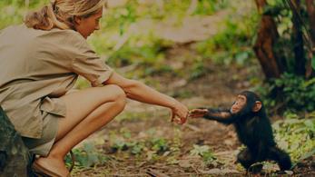 Az volt az álma, hogy majmok között éljen Afrikában