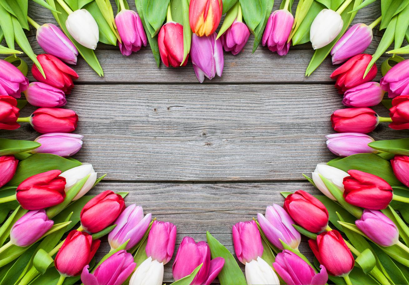 tulipan-sziv