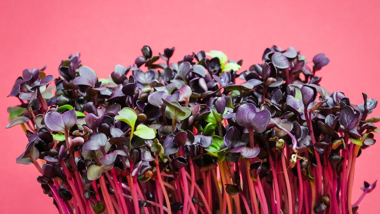 10 étel, ami serkenti a májműködést: érdemes napi szinten fogyasztani őket