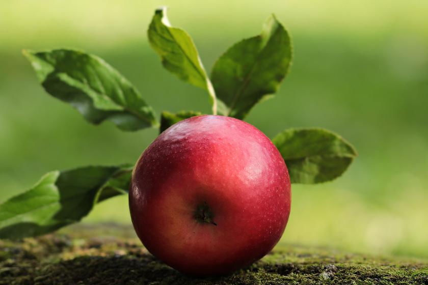 Különösen nyersen és héjastól az alma kiváló rostforrás, ezáltal segít egészségesen tartani a vérnyomást, ráadásul a máj, az emésztőszervek és a belek működésére is jó hatással van.