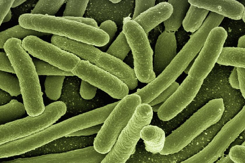 e-coli-bacterium