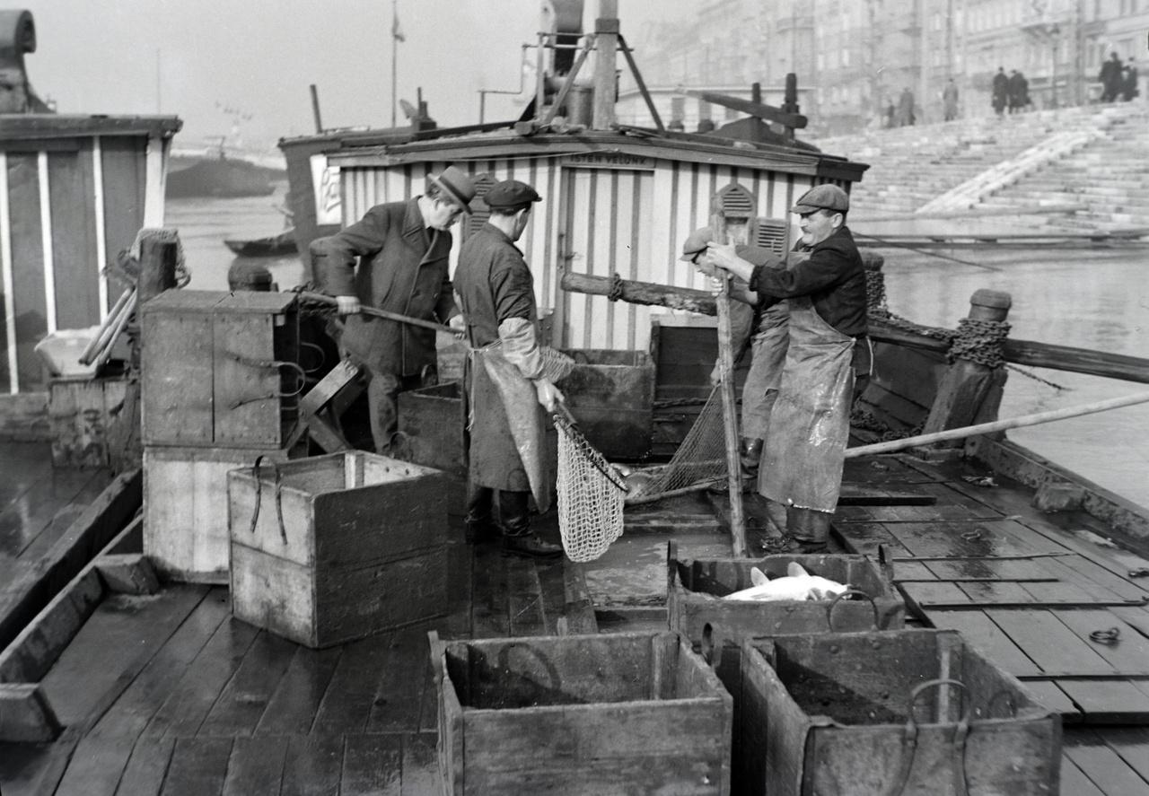 Halkimérés halászbárkán a pesti rakparton a Nagycsarnok közelében. Valószínű a halászoktól közvetlenül sokkal olcsóbb volt megvenni a halat, mint a benti halas kofáktól. Viszont ez otthoni pucolással is járt, ami nem egy kellemes feladat a repkedő pikkelyek miatt.  Tapasztalatból tudom, és egy nagy nagyüzemi halpucolás után – ez egy párkilós pontyot jelent nálam -  például már én sem kívánom annyira  halakból készült halászlevet.