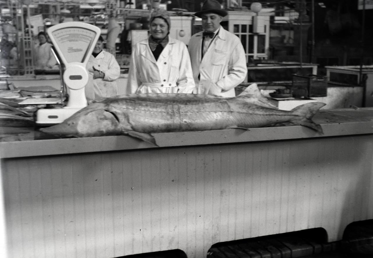 Itt egy kicsit megakad a halbiológiai tudásom, ugyanis nem tudom eldönteni, hogy a képen egy kisebb viza, vagy egy óriásra nőtt kecsege látható, mindenesetre a halas kofák nagyon vidáman fotózkodnak.  A viza és a kecsege is édesvízi tokhal féle, régen a vizabőség olyan magas  volt a fővárosban, hogy partszakaszt neveztek el róla, Vizafogó néven, ennek az emlékét ma is őrzi egy lakótelep. A Vaskapu erőmű megépítése óta nem tudnak idáig feljönni a vizák, tehét nagyobb az esély a kecsegére. Egyébként füstölve a tokhal a legfinomabb, bárki meggyőződhet erről, ha ki tudja fizetni a borsos árat valamelyik eredeti orosz étkeket áruló gasztroboltban.