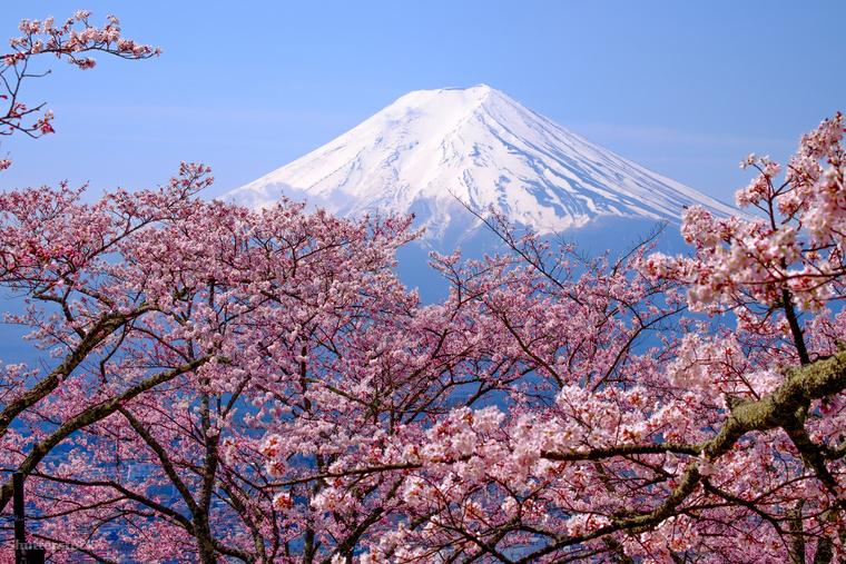 Japánban a tavasz kezdetét a cseresznyefák, azaz a sakurák virágzása jelenti, amivel megkezdődik a több napon át tartó fesztivál is, a Hanami