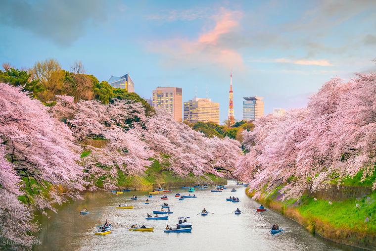 A Hanami szó a cseresznyefák virágzásában való gyönyörködést jelenti