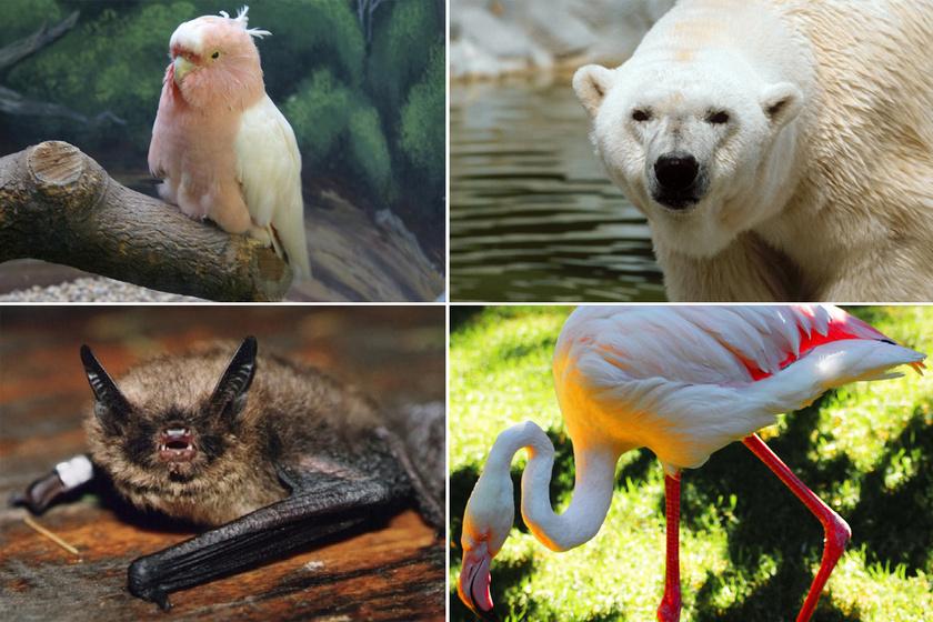 Mutatjuk a világ legöregebb állatait: 507 és 392 éves állatok vezetik a listát