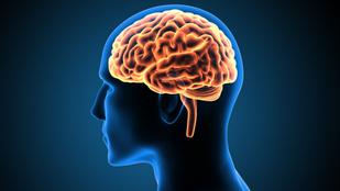3 fontos tudnivaló az emberi agyról