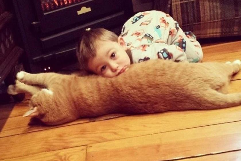 """Abel és Larry azóta szeretik egymást, mióta először találkoztak. A kisfiú első szava a cica neve volt, picit pöszén azt mondta, """"Yarry""""."""