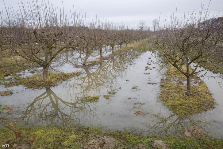 Belvízzel elöntött gyümölcsös a hóolvadás után Kiskorpád határában 2018. március 9-én.
