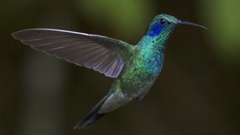 Néhány ember úgy látja a színeket, mint a madarak