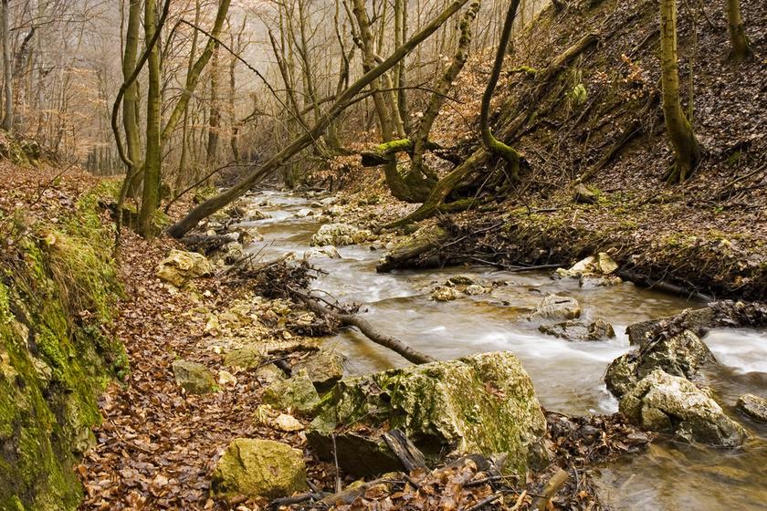 Hova indulj kirándulni tavasszal? 5 magyar völgy és ösvény, ami ilyenkor már gyönyörű