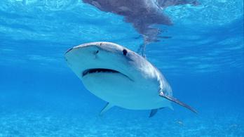 Végre tudjuk, hol szeret a cápa
