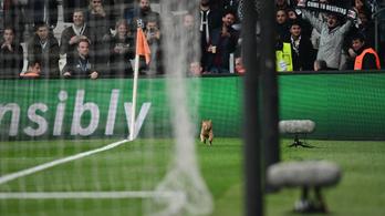 Megbünteti az UEFA a Besiktast, mert pályára lépett a Bayern München legjobbja