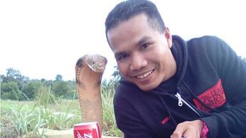 Kígyómarásba halt bele egy malajziai kígyóbűvölő