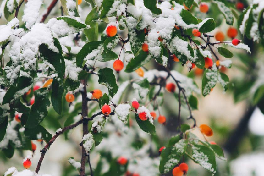 havas-bogyok