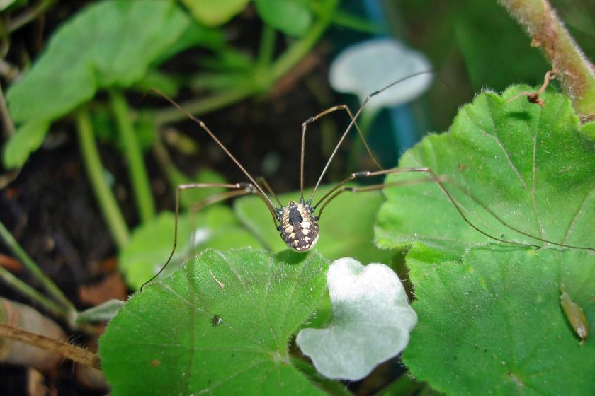 cdc képek paraziták parazitakészítmények diagnosztizálása