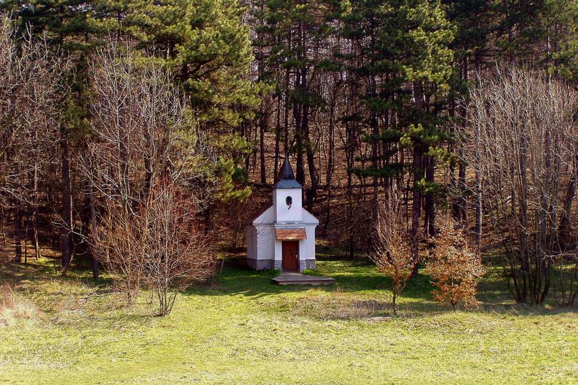 Magyar falucska romjait rejti az erdő: innen tűnt el Körtvélyespuszta