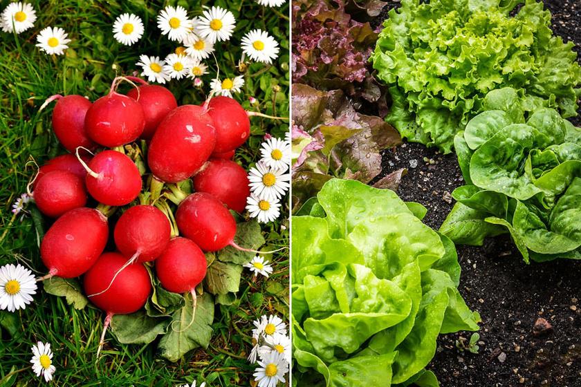 10 növénypár, amit egymás mellé kell elültetni: több lesz a termés, és kevesebb a kártevő, vegyszer nélkül
