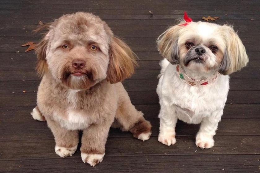 Ezt a képet osztotta meg Chantal barátja: Yogi a bal oldalon látható, és tényleg szembetűnő, hogy mennyire más az arca, mint a mellette ülő kutyának.