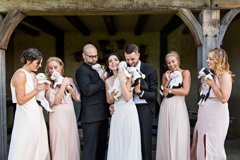 Ez a pár kiskutyákra cserélte az esküvői csokrokat: megható, miért tették ezt
