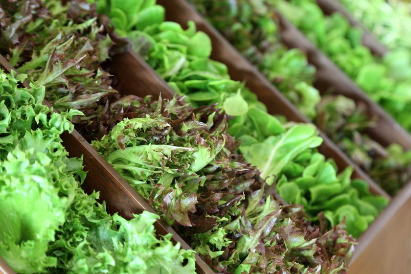 A zacskós salátákban sokszor kukorica, répa és más, a fogyókúrába nem túl jól beilleszthető összetevő van, ráadásul drágák is. Válassz a zöldséges pultból inkább frisset. A fejes saláta az egyik legolcsóbb opció, de semmivel sem rosszabb a jég- vagy lolo rosso salátáknál.