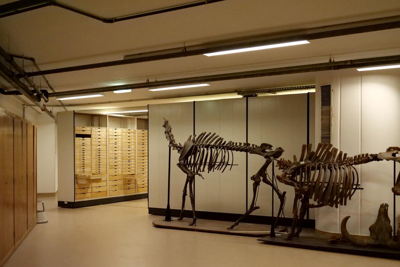 Három emelet mélyen a föld alatt rejtőzködnek ezek a csontvázak.
