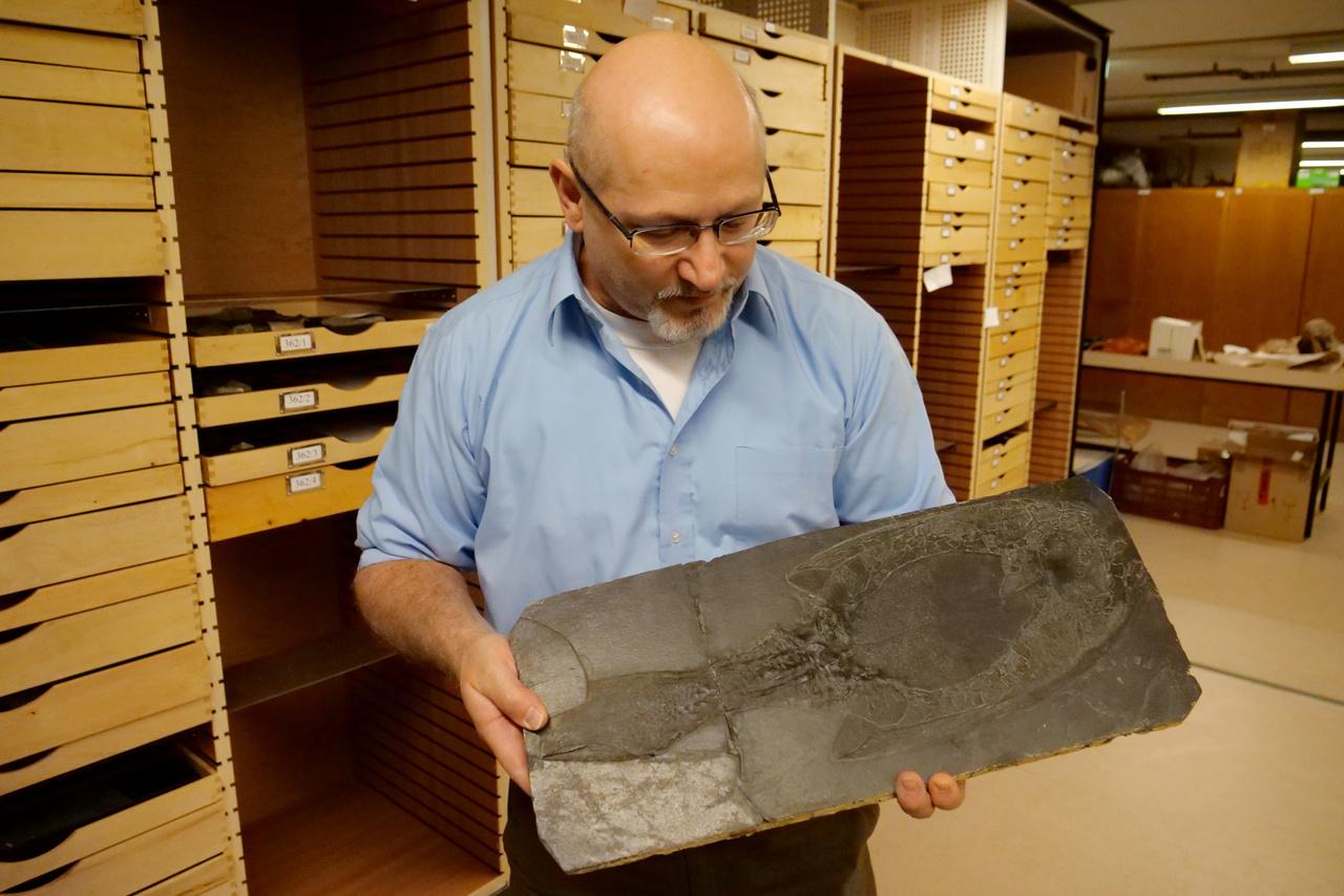 Gasparik Mihály 30 éve a múzeum őslénykutatója, a kezében egy 300-400 millió éves fosszília, a múzeum egyik legrégebbi lelete, egy őshalféle, ami olyasmi lehetett, mint egy kéziporszívó. Ez a jószág amúgy annyira ősi hal, hogy távolabb áll az evolúciós létrán a lazactól, mint a lazac az embertől.