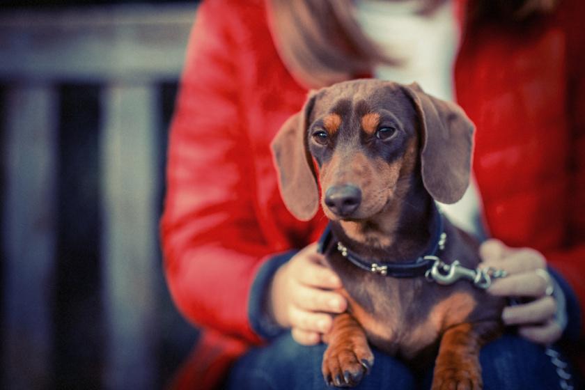Mit gondolhat rólad a kutyád? Állítólag bármit teszünk, ítélkeznek