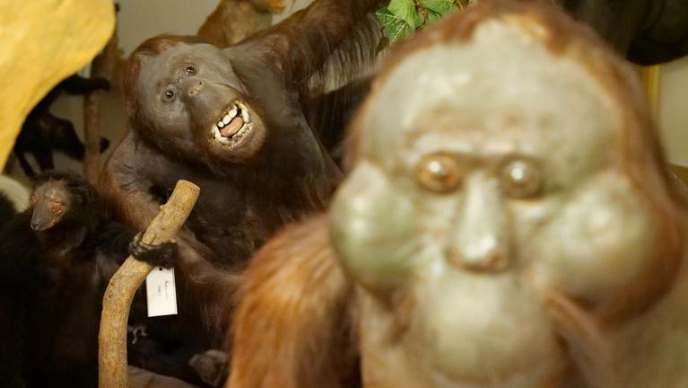 Három emelet mélyen rejtőzik az ország legbizarrabb gyűjteménye