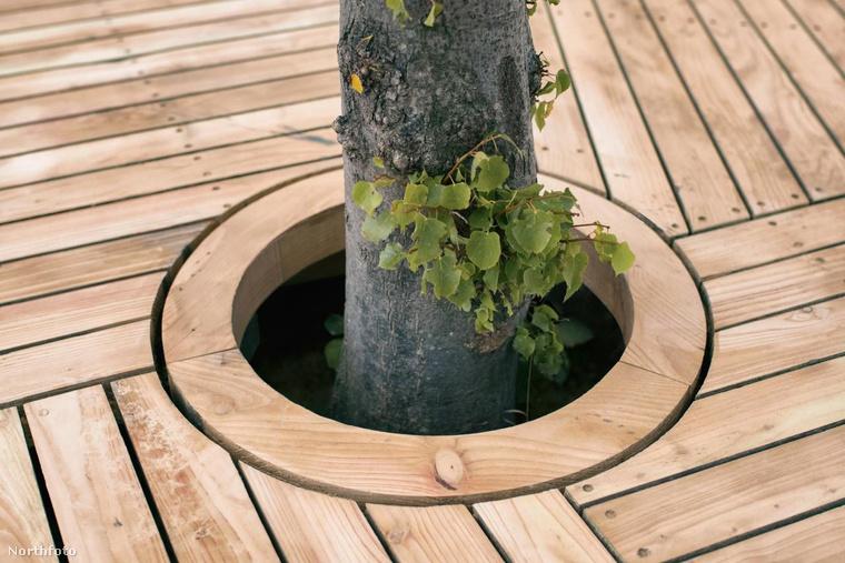 Igen, ez egy igazi fa! És a szigetet elvileg össze lehet majd kapcsolni a többivel (mármint ha azok is készen lesznek), és így kész rendezvényeket, illetve fesztiválokat lehet majd tartani a parkipelágón