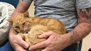 14 év után talált rá halottnak hitt macskájára