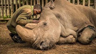 Könnyes RIP Sudan-t posztolni nem elég!