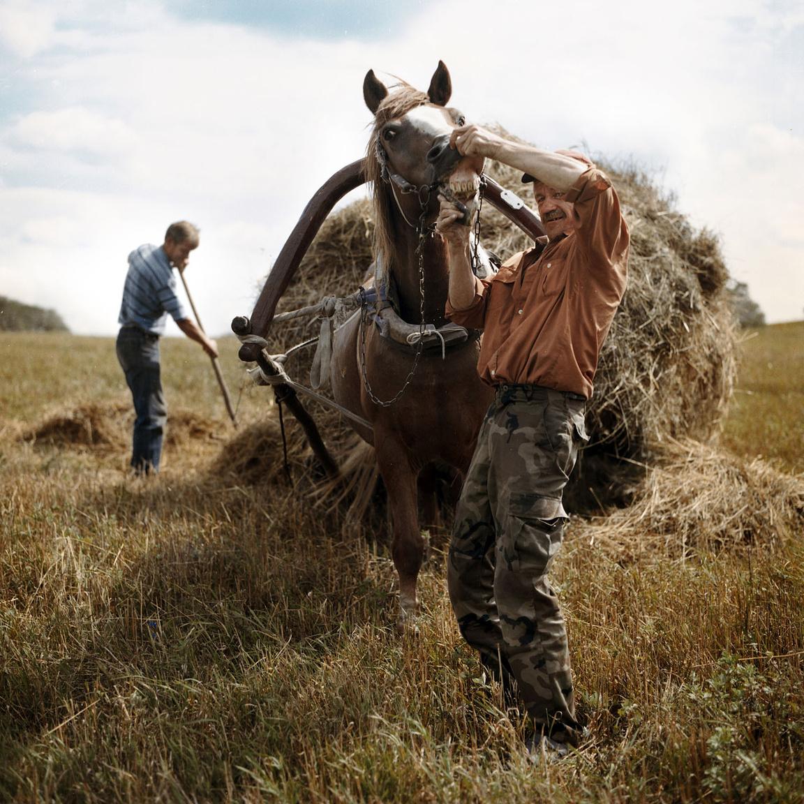 """""""Én vagyok itt az utolsó, aki még lóval jár szénát gyűjteni, majdnem biztos vagyok benne. Mint régen, amikor mindenfelé a barátaim megrakott szekereit lehetett látni. Hiányzik ez nagyon."""" A két gazdálkodó a képen: Tolik és Dainius."""