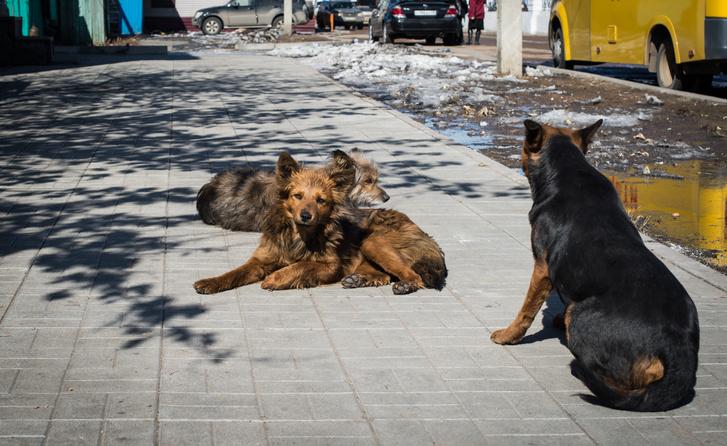 A kutyaszarbűnözés feltételezett elkövetői
