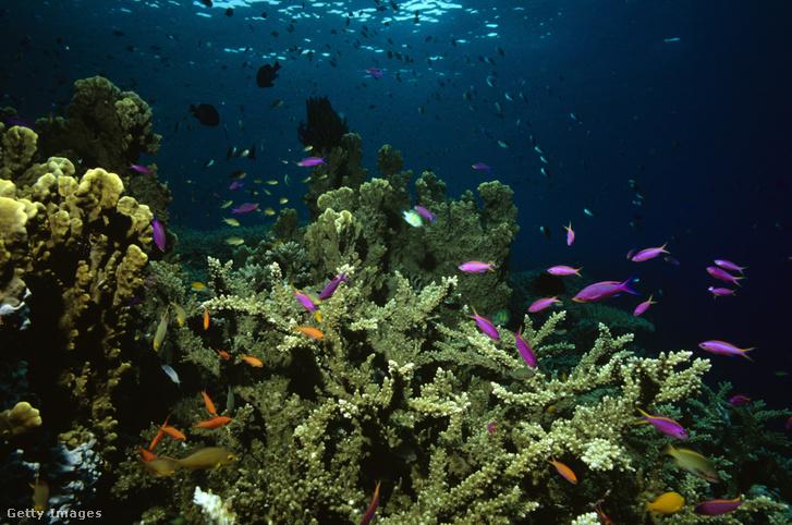A nagy korallzátony Queensland partjainál