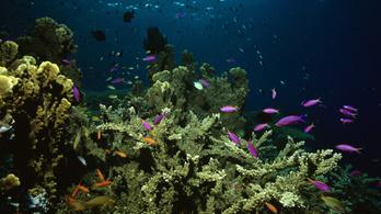 Hajszálvékony napernyővel védenék meg a korallzátonyokat az unokáinknak