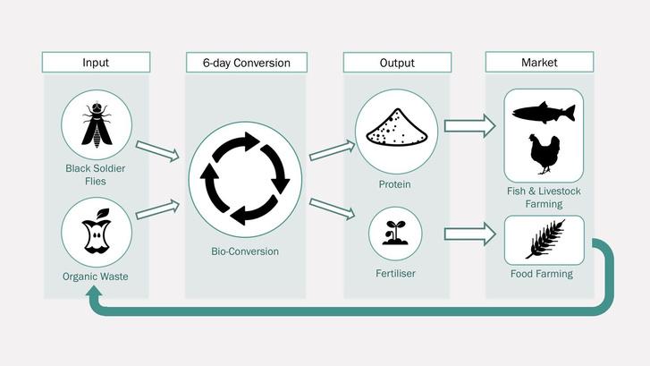 Entocycle-Circular-Process
