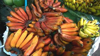 A vörös banán finomabb és egészségesebb, mint a sárga