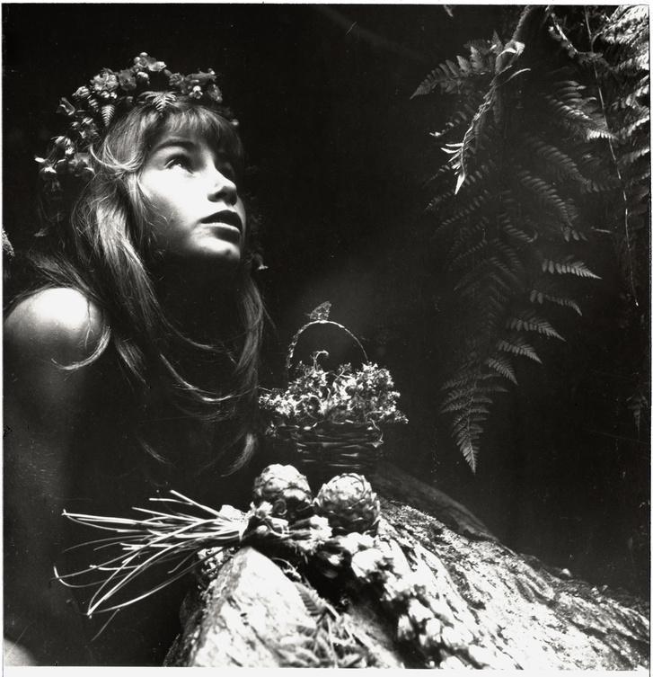 Ata Kando: Álom az erdőben cimű könyv borítója (1982)