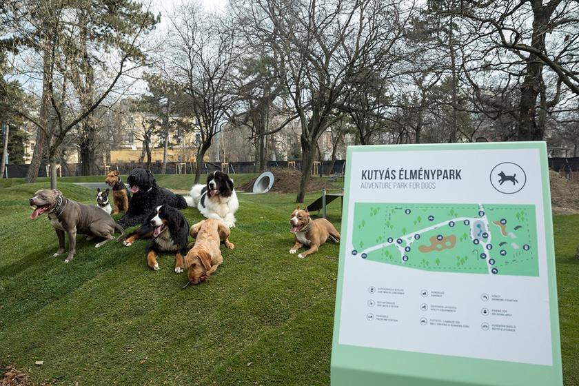 kutya-elmenypark
