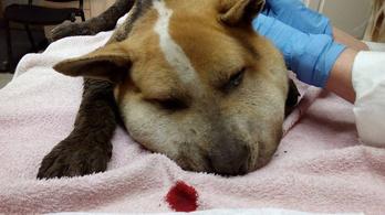 Súlyosbították a kutyájuk megkínzása miatt elítélt pár büntetését