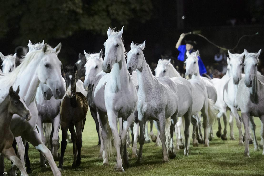 Lipicai lovasfesztivál Szilvásváradon