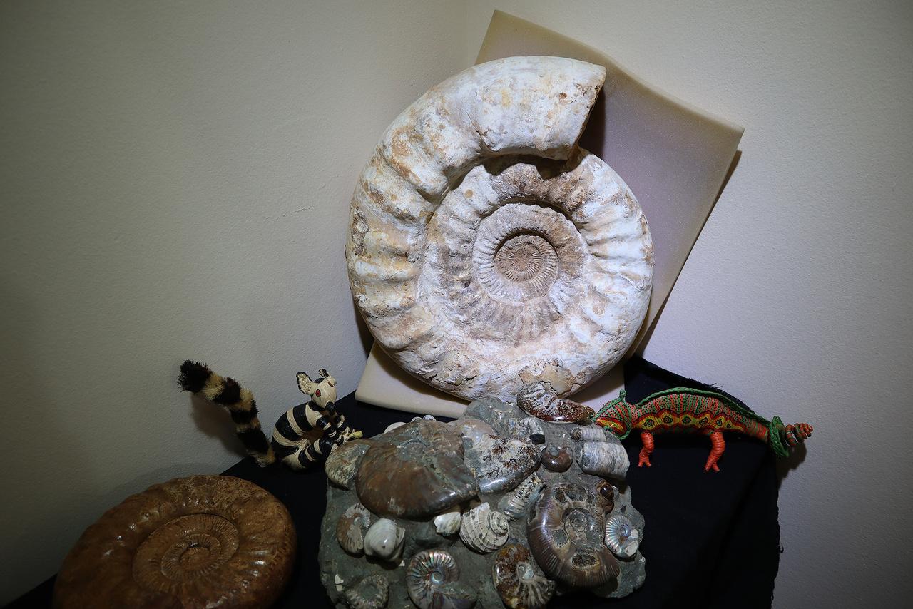 Ammoniteszek minden mennyiségben és méretben.